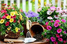 mensagem_otimismo_jardineiro