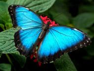 mensagem de otimismo borboleta azul igreja catolica www.cantodapaz.com.br liturgia ordem franciscana irmas clarissas