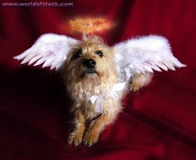 cachorro cao gato animais passarinhos passaros racao ceu amigo