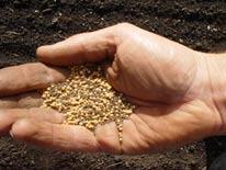 semente de mostarda evangelho comentado igreja catolica jesus cristo nossa senhora