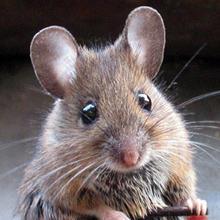 mensagem-homem-rato